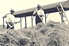 Sid Pickering and Arthur Horner haymaking at Broad Farm